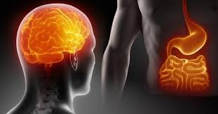 difese immunitarie intestino cervello